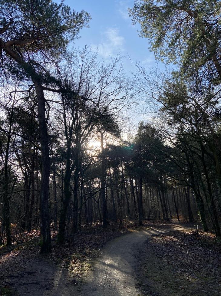 Vrachelse Heide tussen Den Hout en Oosterhout